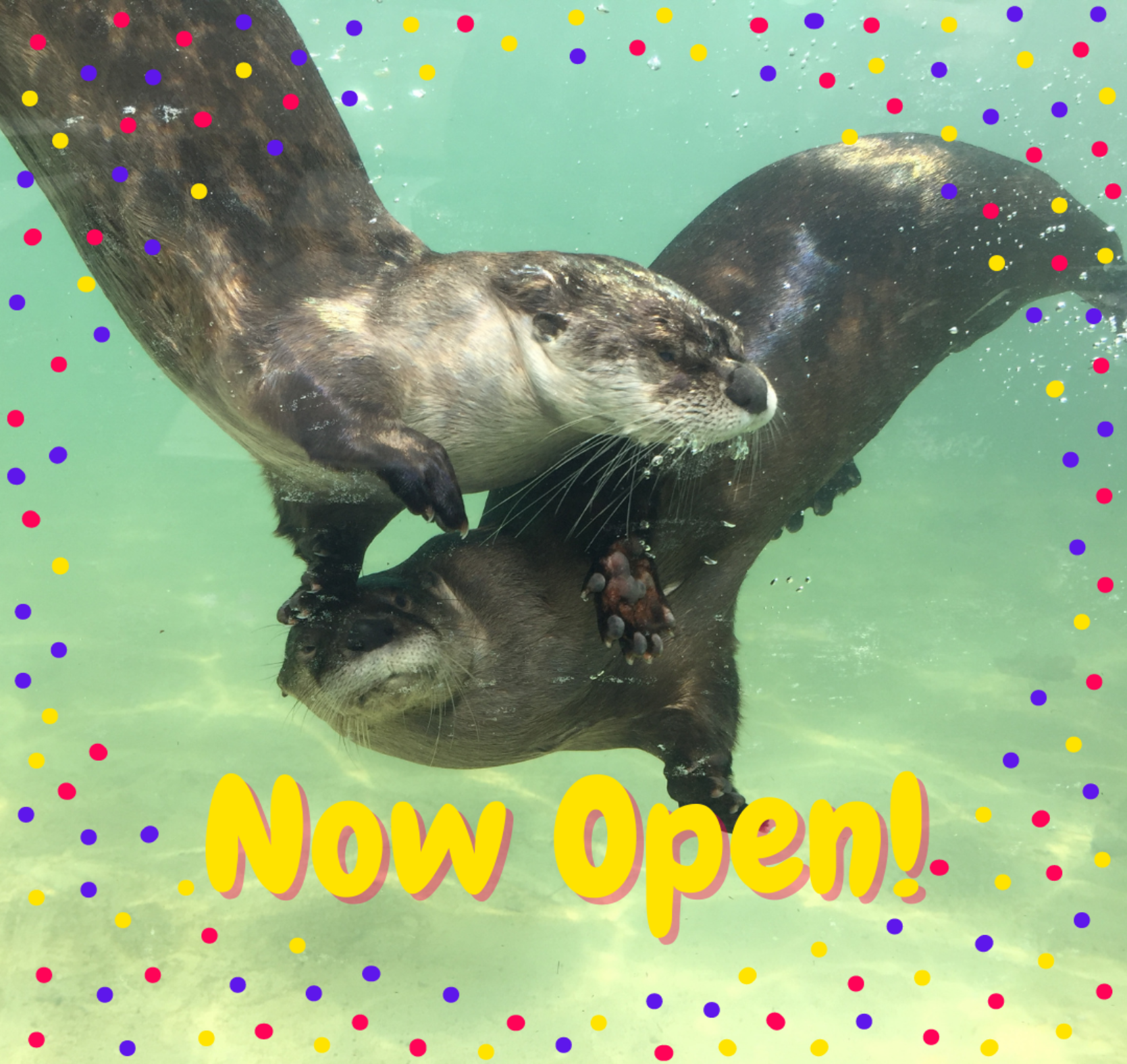 Otter Exhibit Now Open!